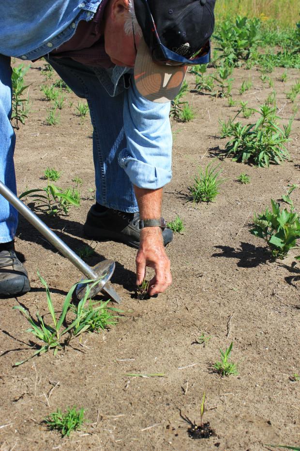 Tallgrass Prairie planting