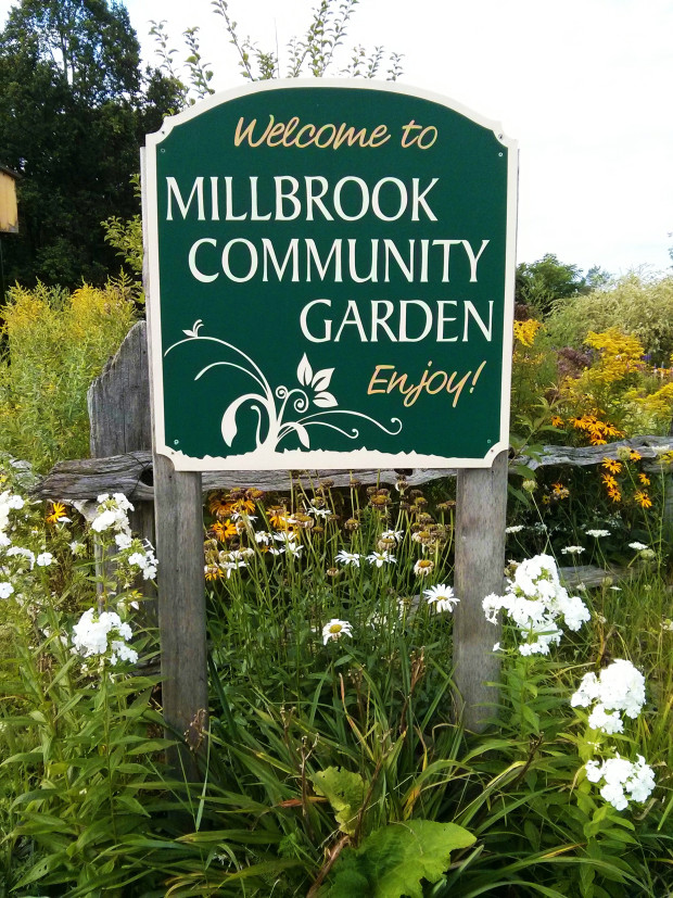 Generous Volunteers grow fresh produce for Foodshare each wek at the Millbrook Community Garden.  Photo: Karen Graham.