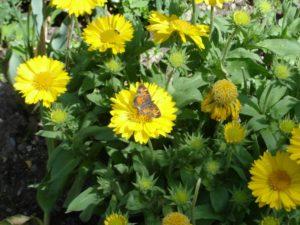 ©DeborahCarew Butterfly