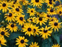 Place Your Native Plant Orders Before September 4