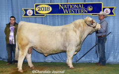 Local Bull Earns Top Prize in US National Show