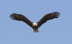 Eagles We Have Seen on High