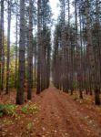 50 Million Trees Project Helps Landowners Implement Large-Scale Tree Planting Projects