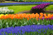 Comment – Spring has Sprung