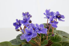 Next Garden Club Meeting Features Presentation about Tropical Houseplants