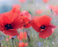 Two Events Mark Armistice Centenary