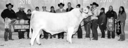 Canadian National Champion Charolais Bull – Double Vision
