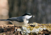 Learn How to Attract Summer Birds at the next Millbrook & Area Garden Club Meeting