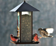 The Impact of Climate Change on Which Birds We See