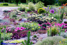 First Summer Outing as Garden Club Visits Anna's Perennials on July 3rd