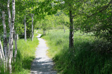 TAG – We're It – Millbrook Invited to Join Toronto-Algonquin Greenway Project